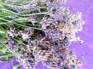 Lavendel Tarte