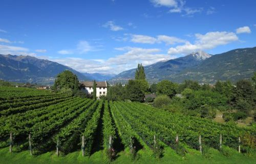 Weinschule